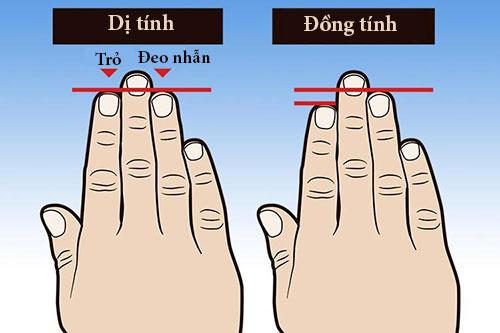 chiều dài ngón tay sẽ chỉ ra xu hướng tình dục